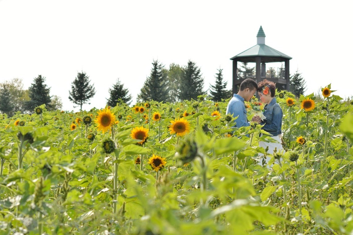 A couple poses in the sunflower patch