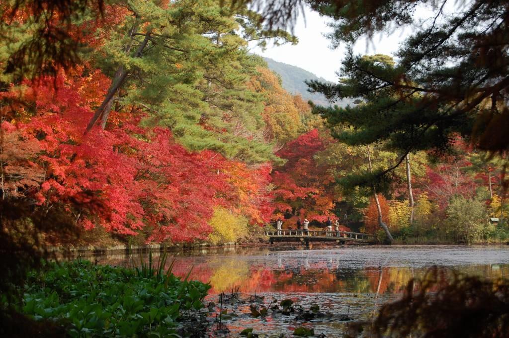 神戸のおすすめ撮影スポット www.kobe-park.or.jpより引用