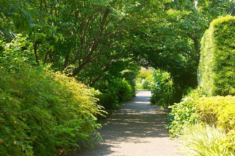 二子玉川の谷川緑道の写真