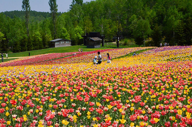 General photo of the flower fields in Takin Suzuran Park