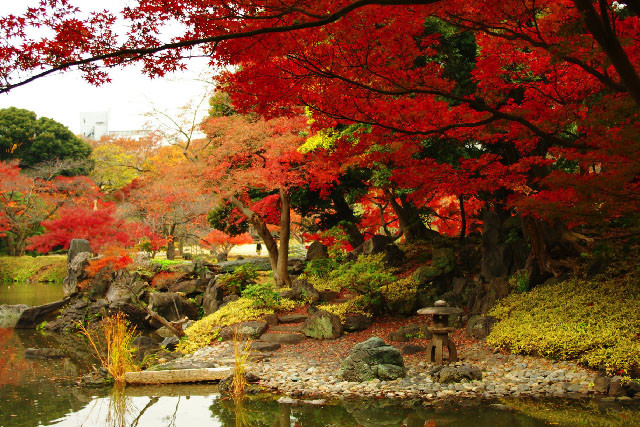 Photo of beautiful autumn leaves in Tokyo, Japan