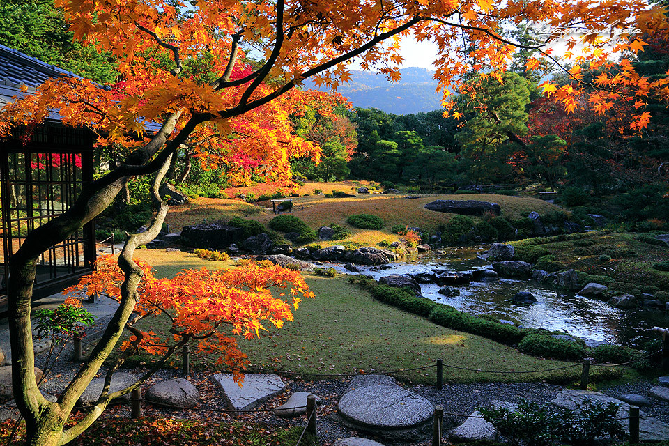 The best place for pre wedding photo shoot in autumn Japan: Kyoto