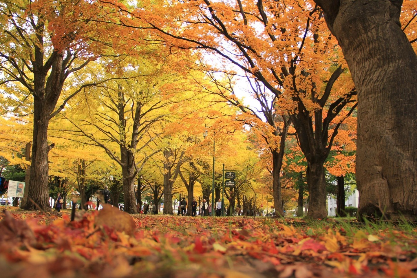 Beautiful autumn leaves in Hokkaido, Japan