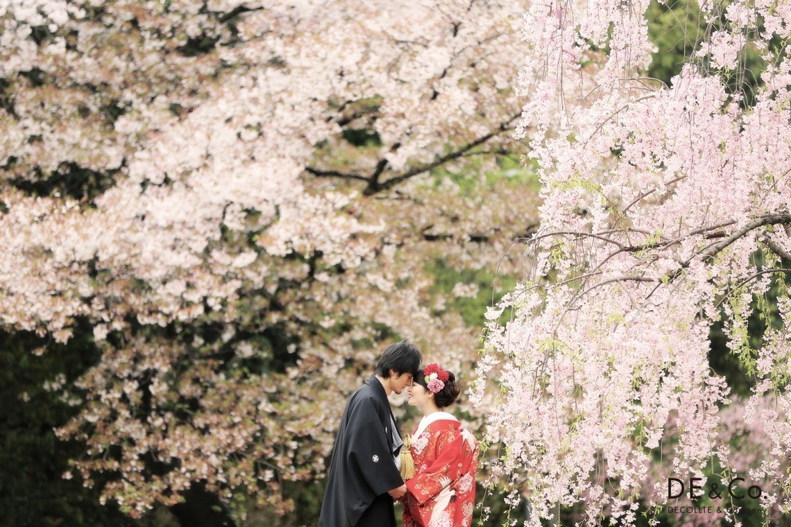 Couple in kimono posing with a kiss in front of the sakura trees. Taken by Studio Giroux.