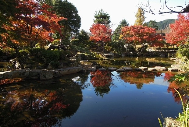 Beautiful autumn leaves in Fukuoka, Japan